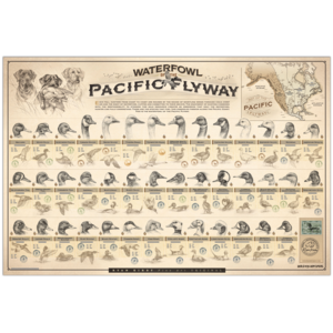 Ryan-Kirby-Waterfowl-Pacific-Flyway-Poster-Duck-Identification-Chart-Sketches copy.png