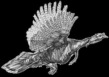Turkey Hunting Ryan Kirby Art The Studio
