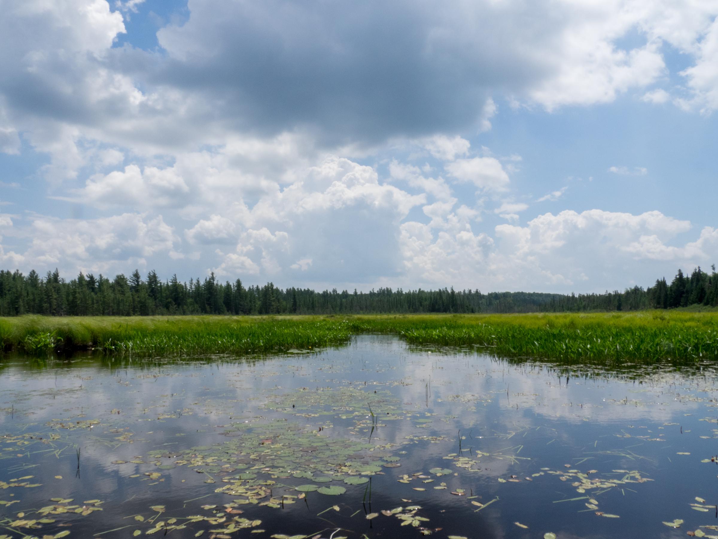 The Bog near the Raquette River