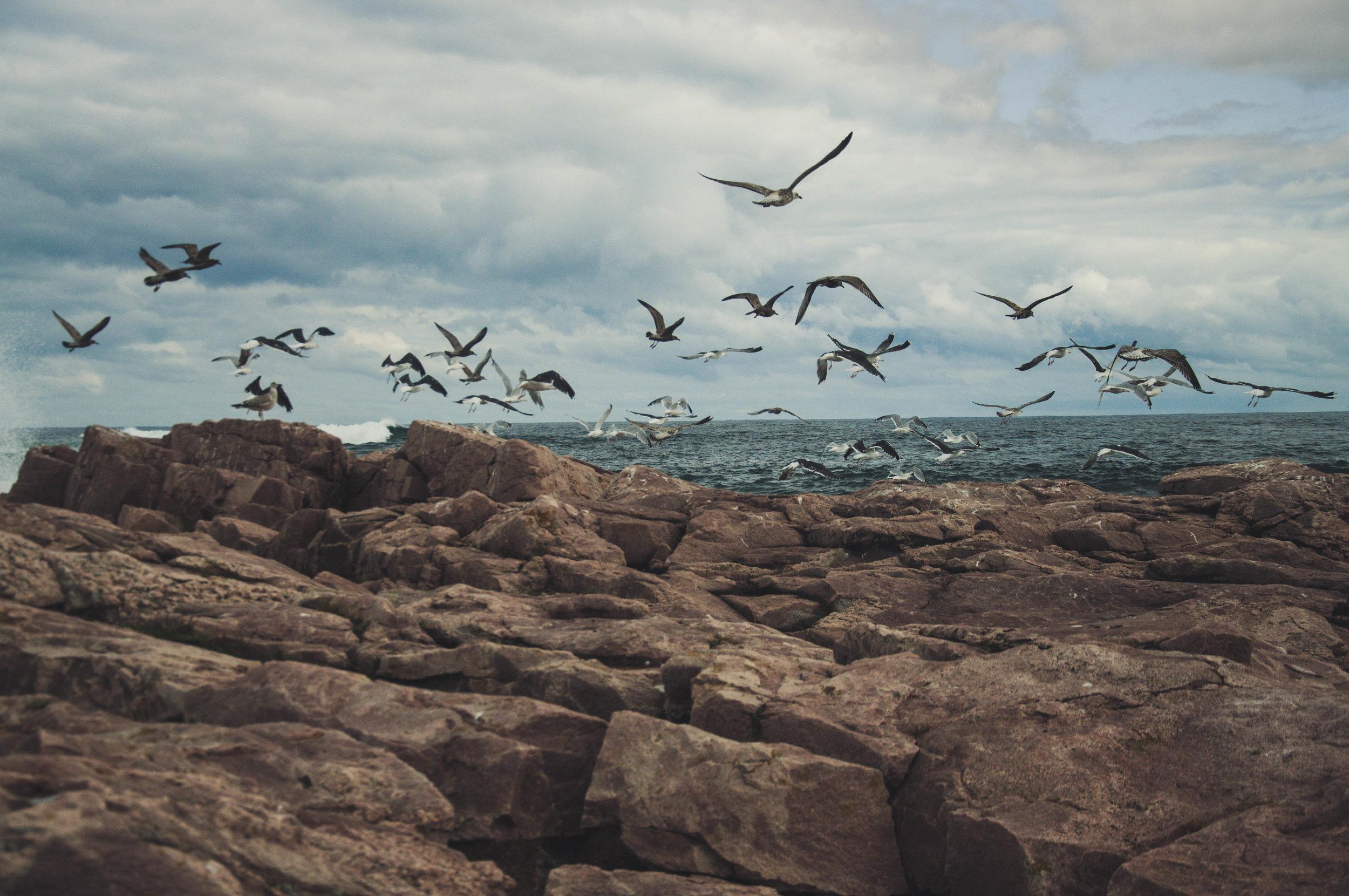20140915-Cape_Breton-362.jpg