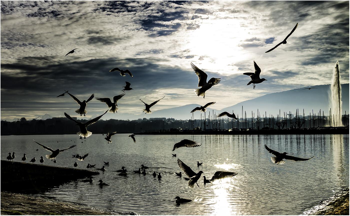 Geneva-2505.jpg