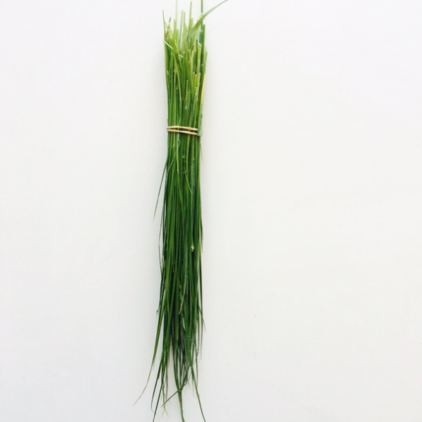 sweet grass  (Hierochloe odorata)  was part of my payment for the day. I have since braided the grass to make ceremonial smudge sticks.