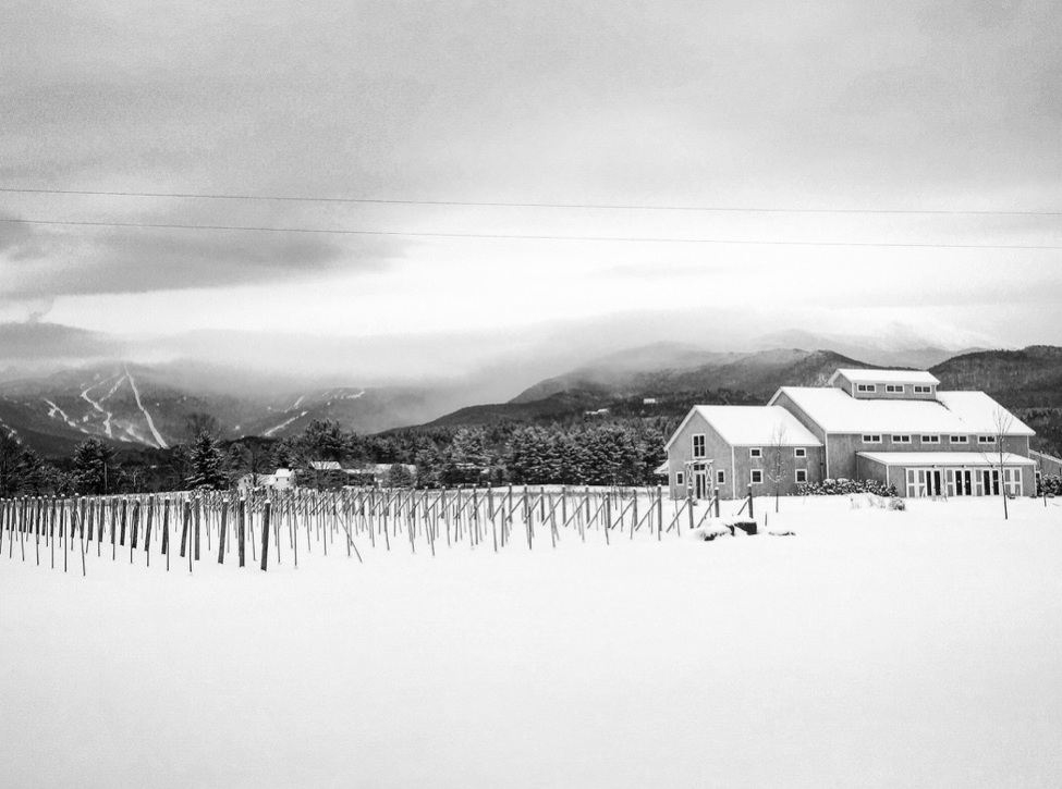 A beautiful blanket of white as seem from the vineyard. Mt Mansfield behind the clouds.