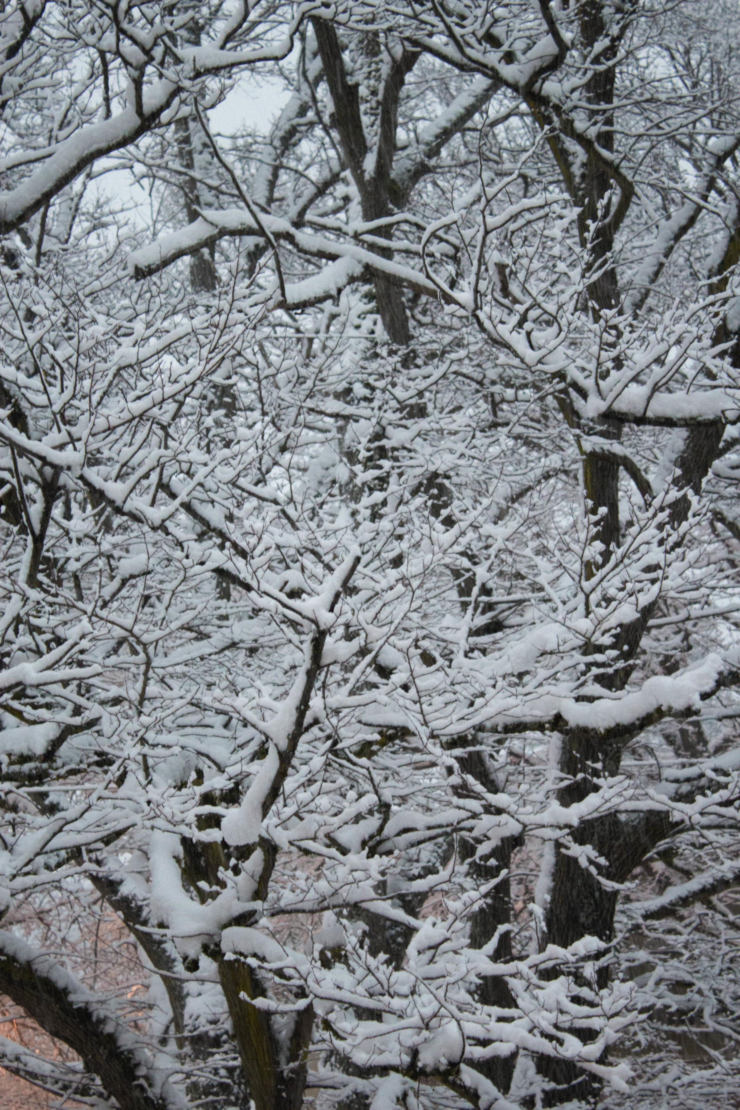 snow day-22.jpg