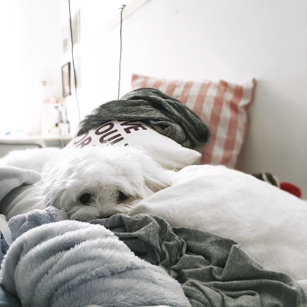 Sleepy puppy snuggling on the bed