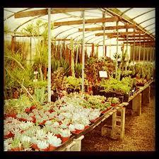 cactus mart