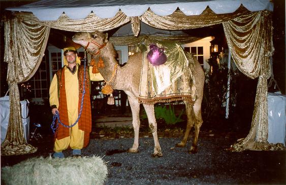 events_camel.jpg