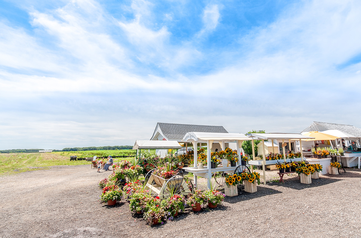 Patty's Berries and Bunches Farm Stand