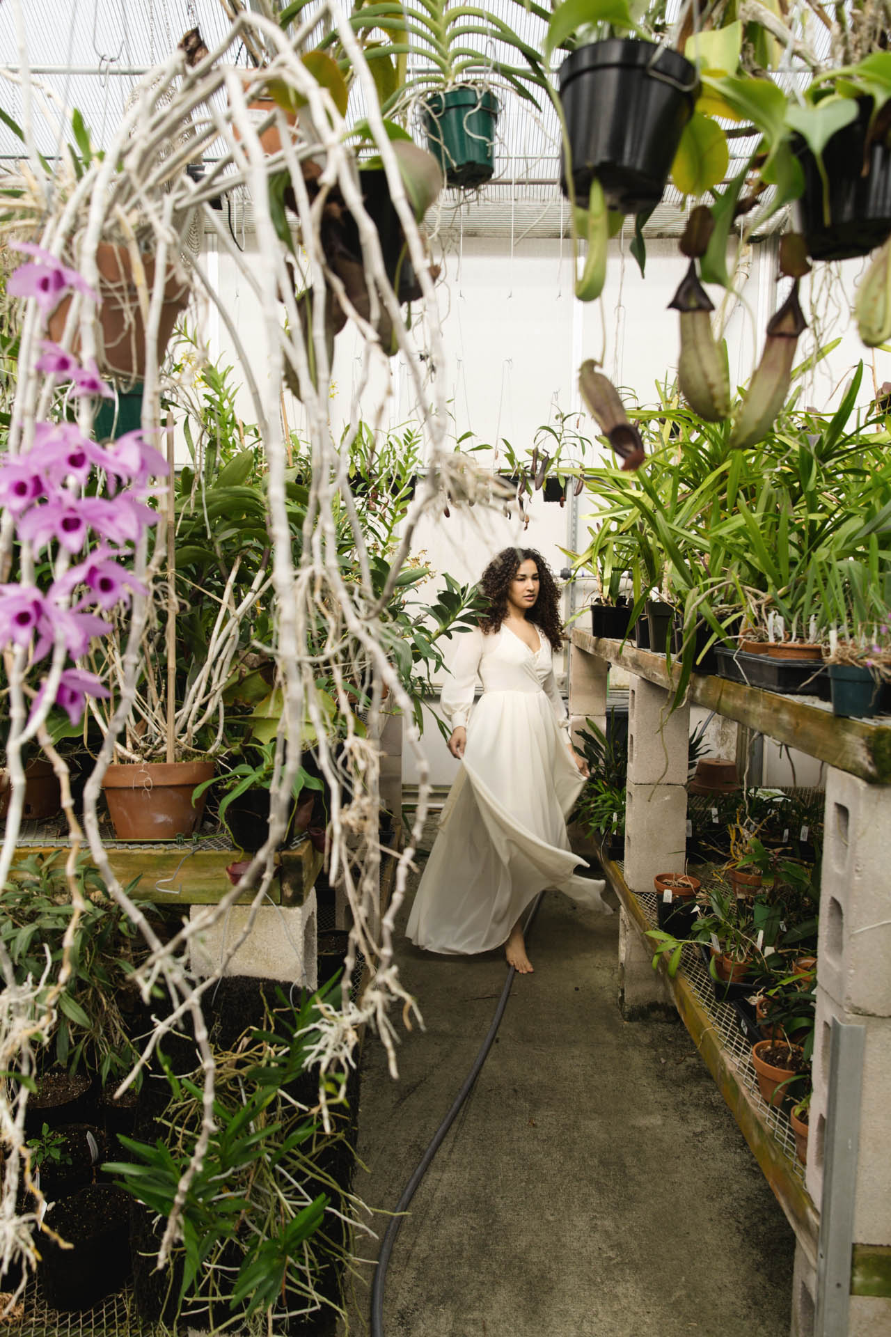 Greenhouse_orchid_Goddess
