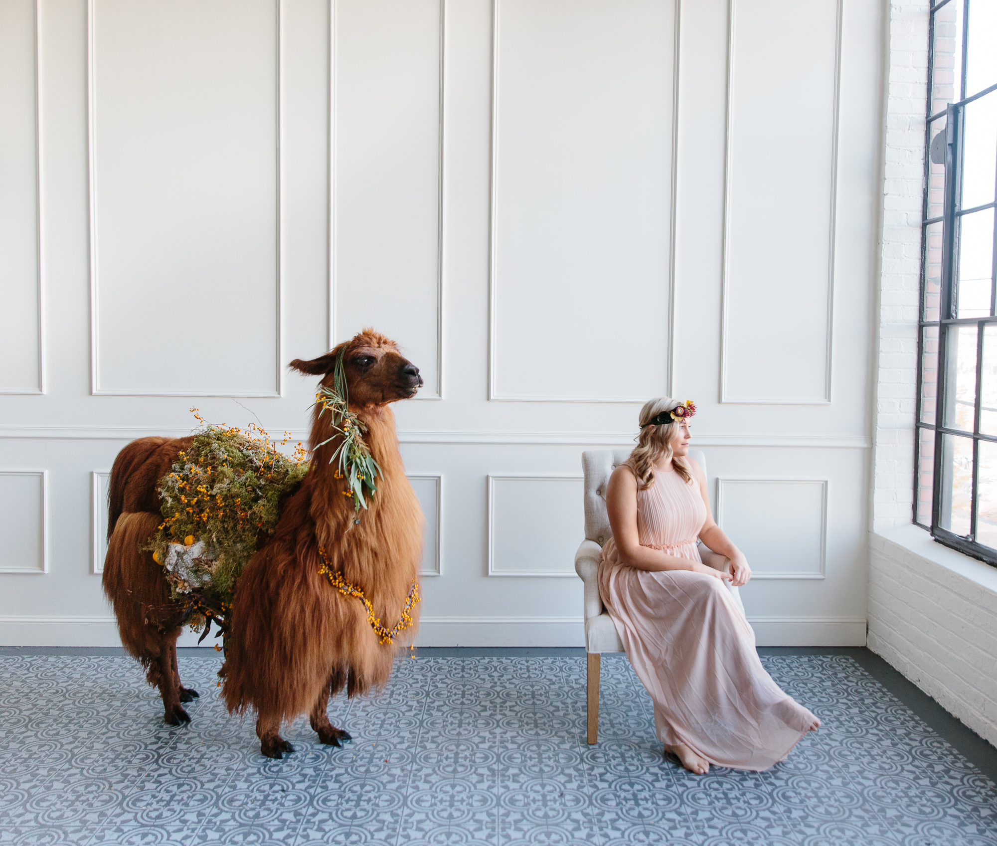 llama_portland_animal-21.JPG