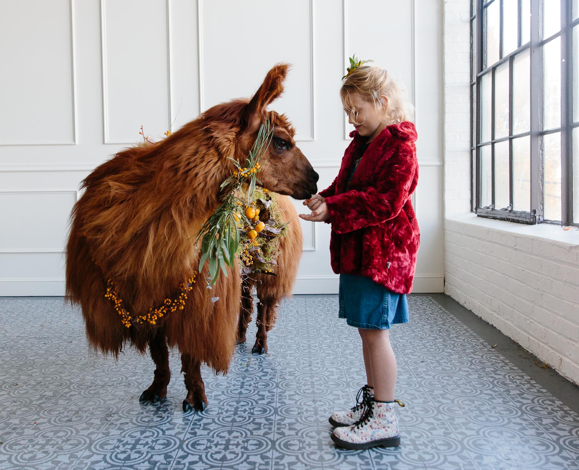 llama_portland_animal-31.JPG