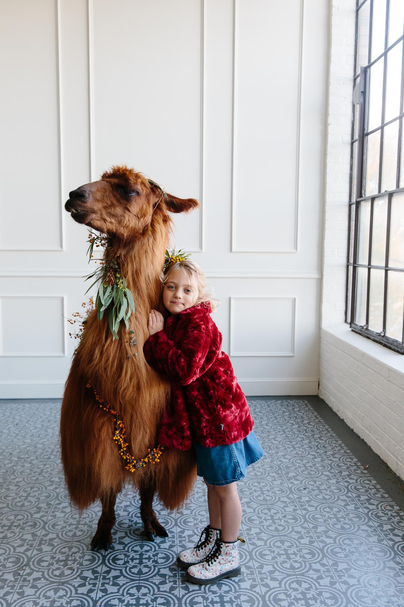 llama_portland_animal-35.JPG