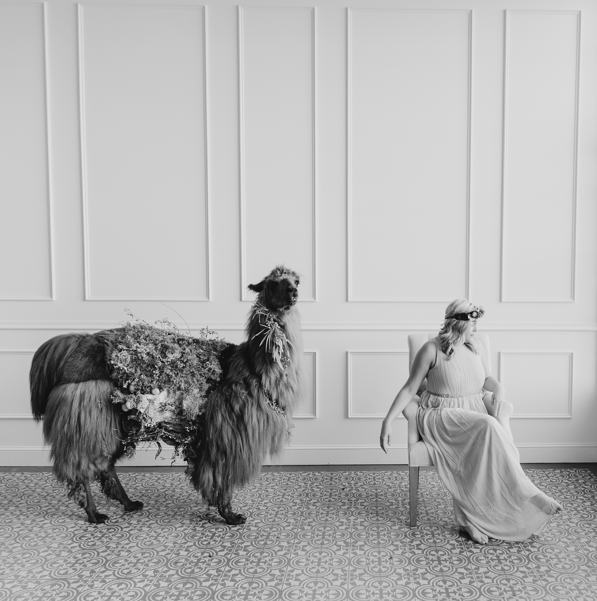 llama_portland_animal-19.JPG