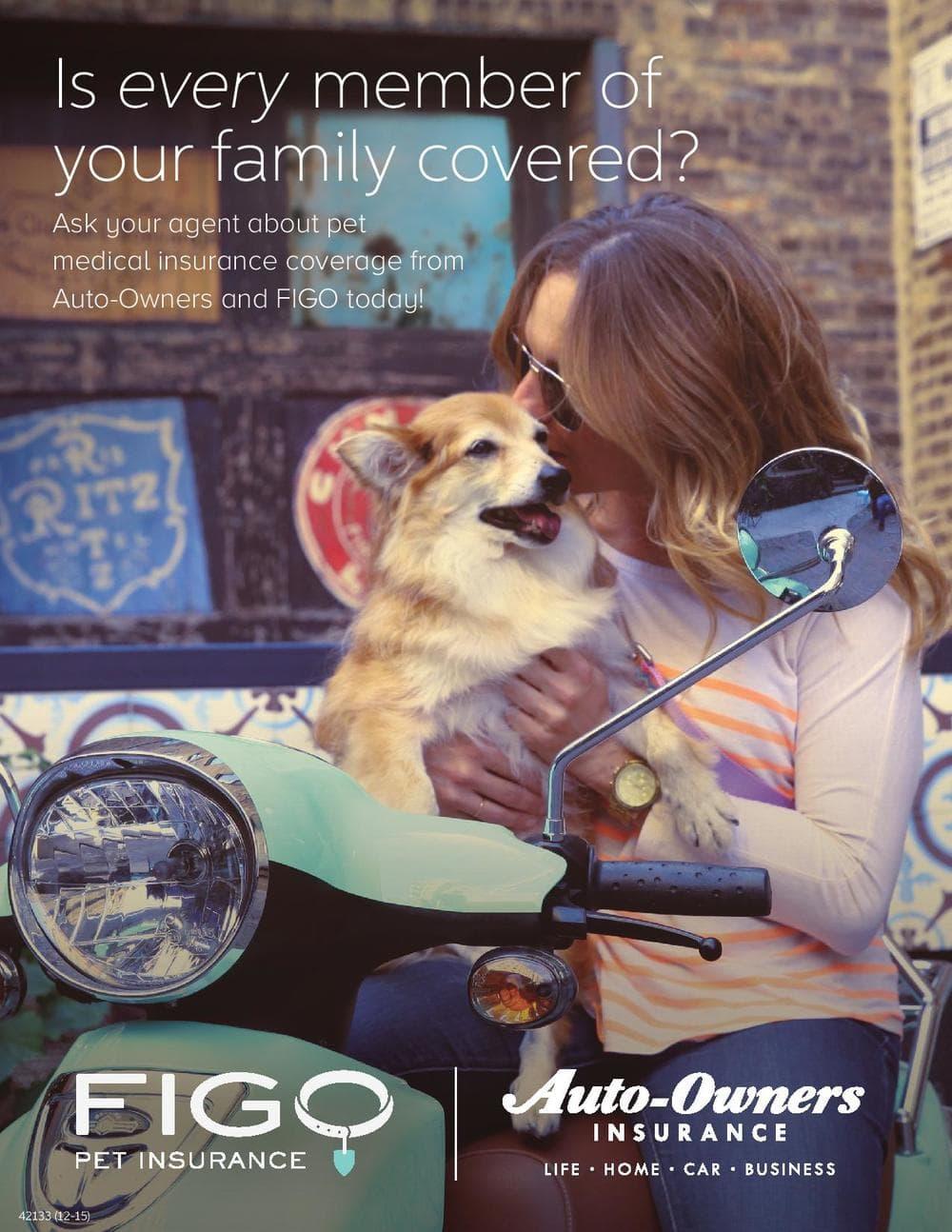 Figo Pet Insurance.jpg