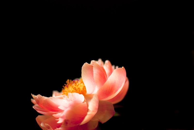 Pink Peony.jpg
