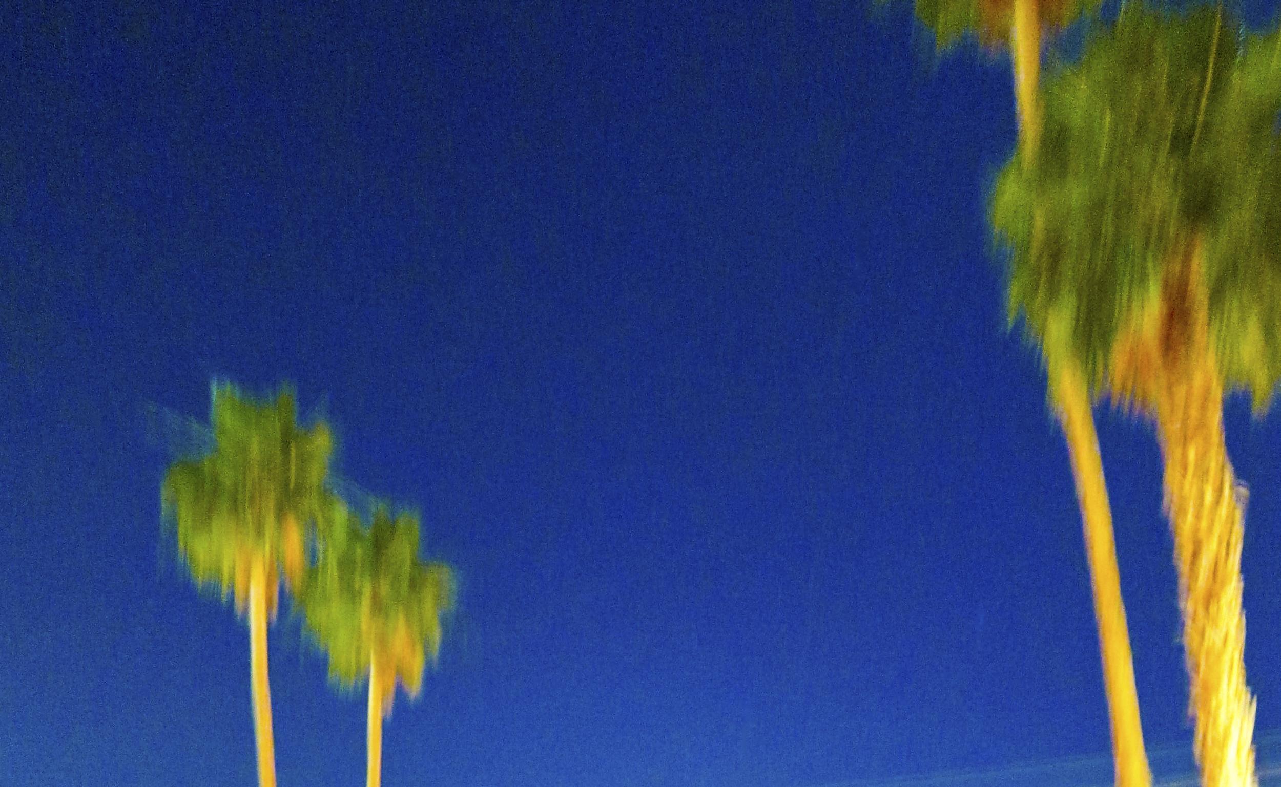 blurry palms.jpg