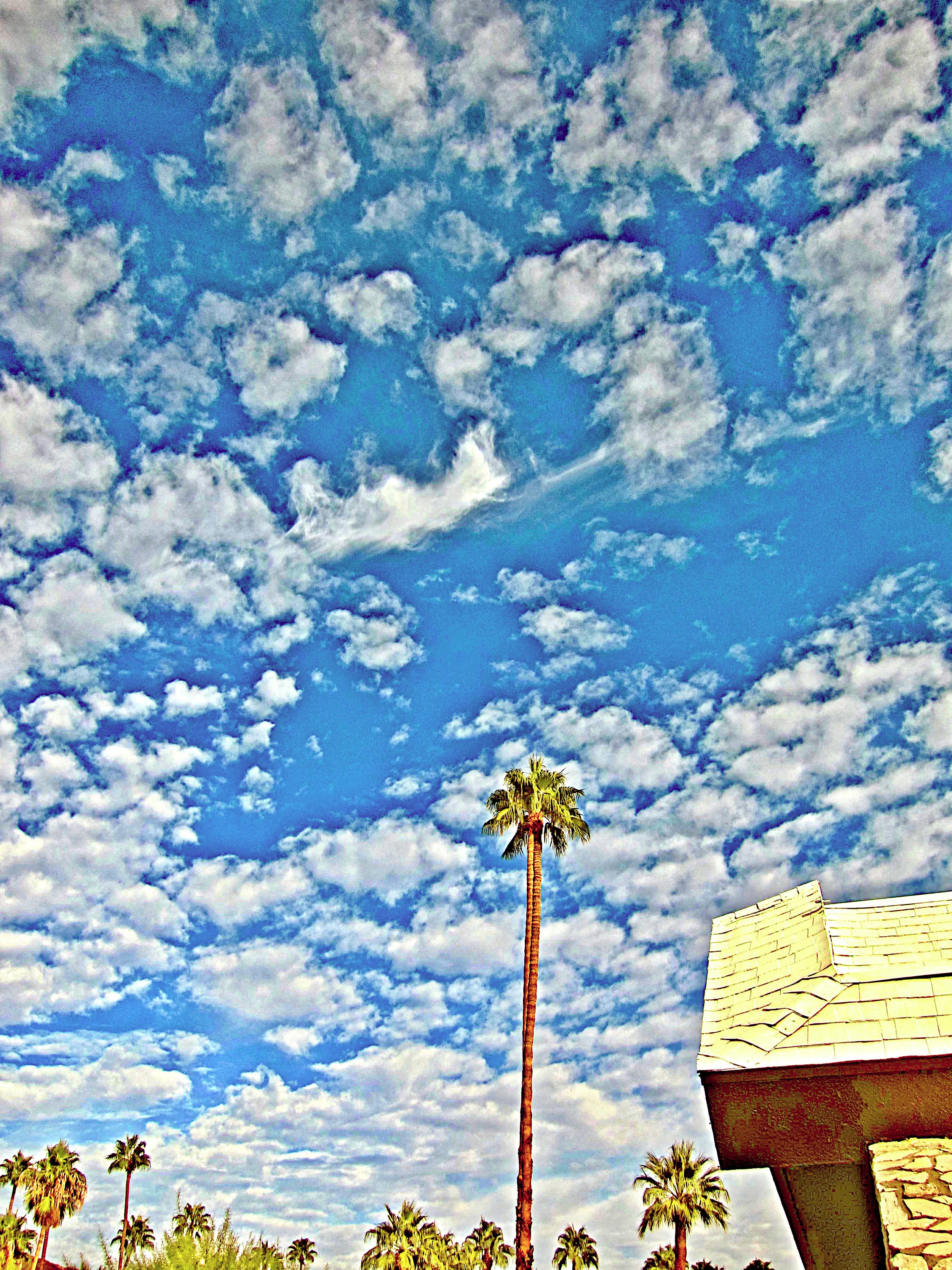 palm sky (1).jpg