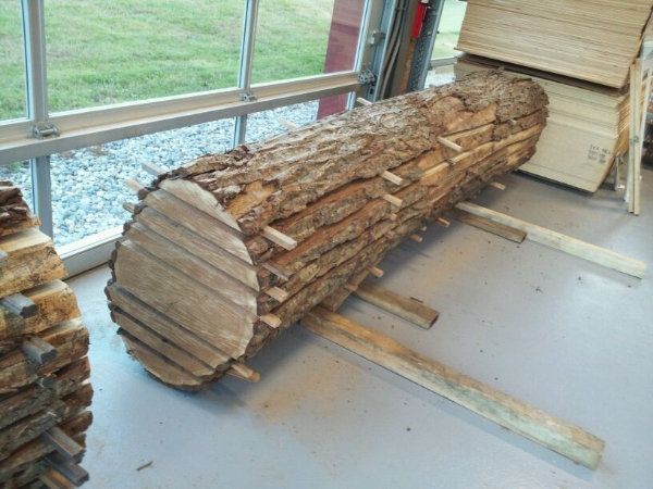 10ft butternut live edge log complete.jpg