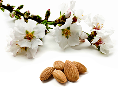 Almonds_Large_Blossom_web.jpg