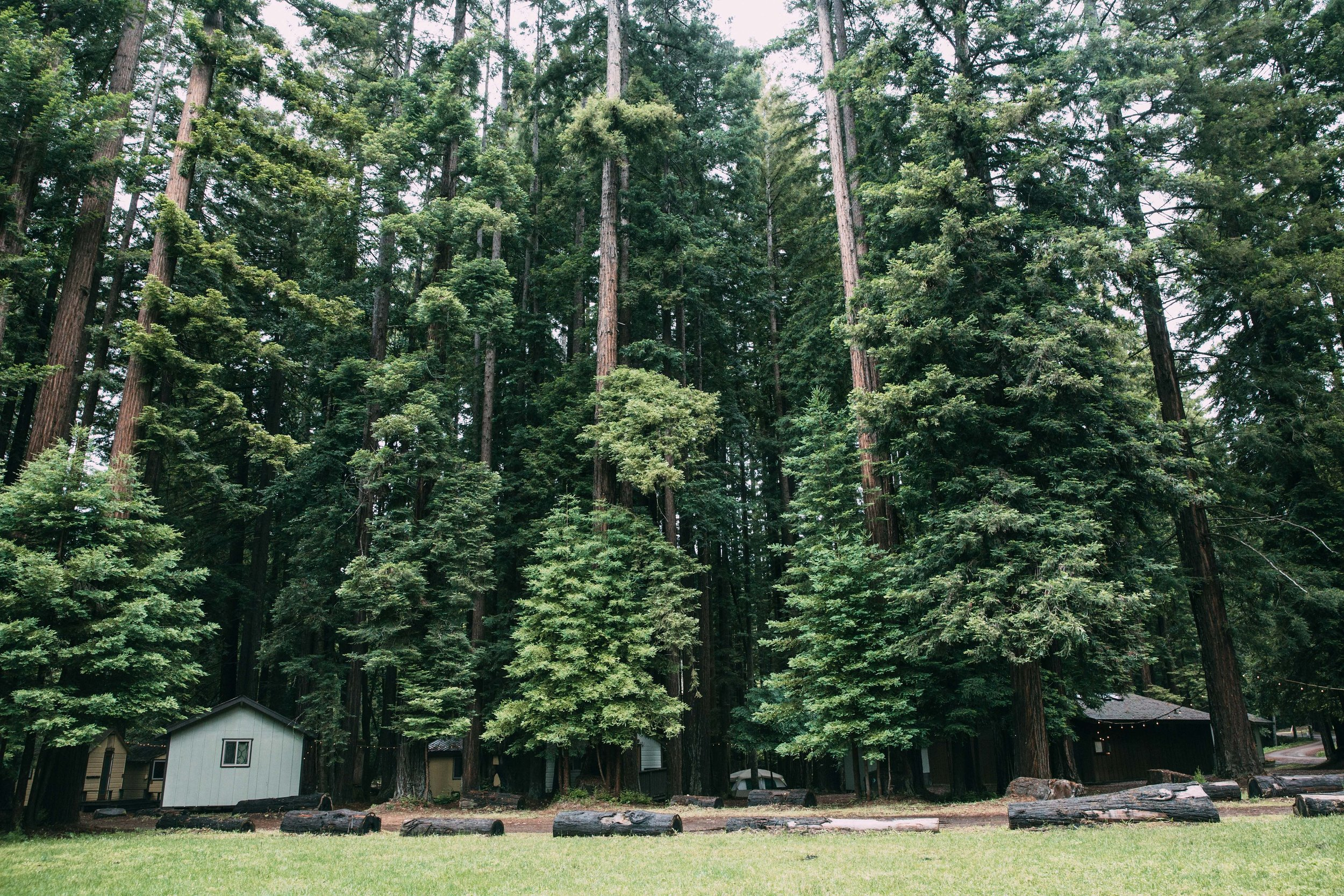 Trees and cabins.jpg