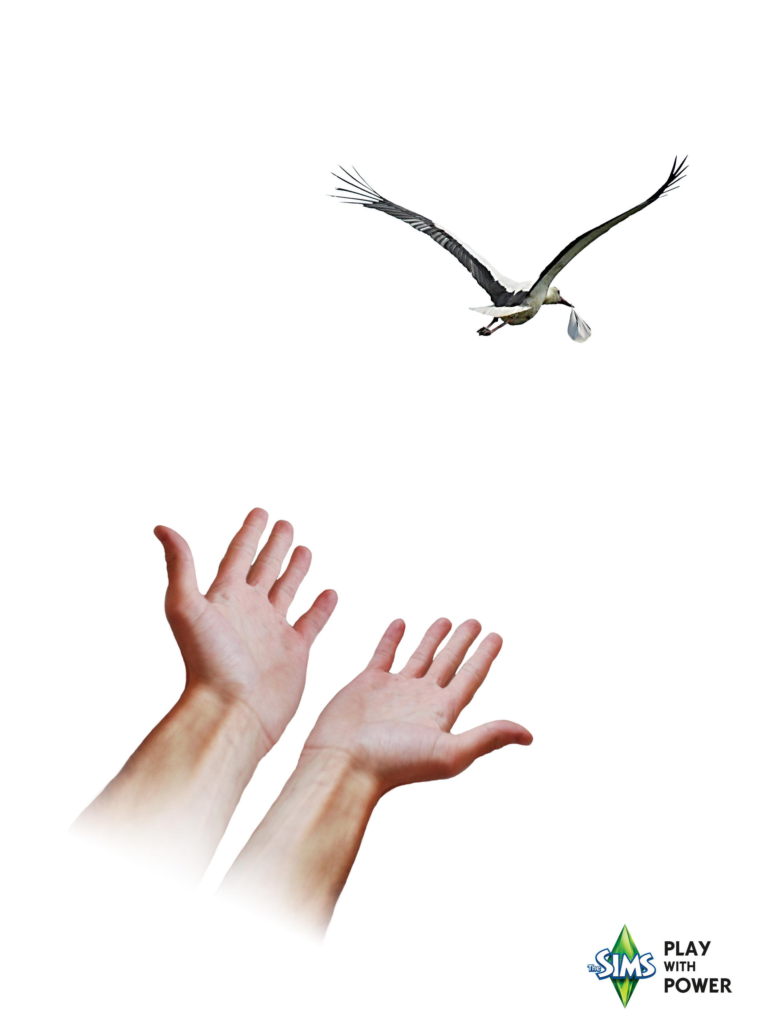 Stork_3.jpg