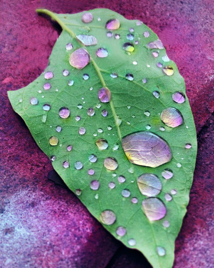 SaraChaudhuri-Meaghan-Leaf.jpg