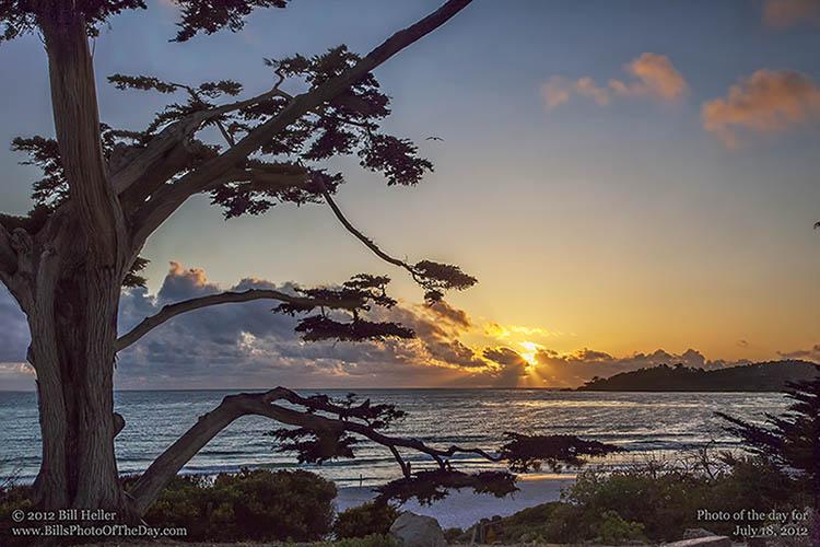 Cypress-on-the-beach-in-Carmel-by-the-Sea-California-by-Bill-Heller.jpg