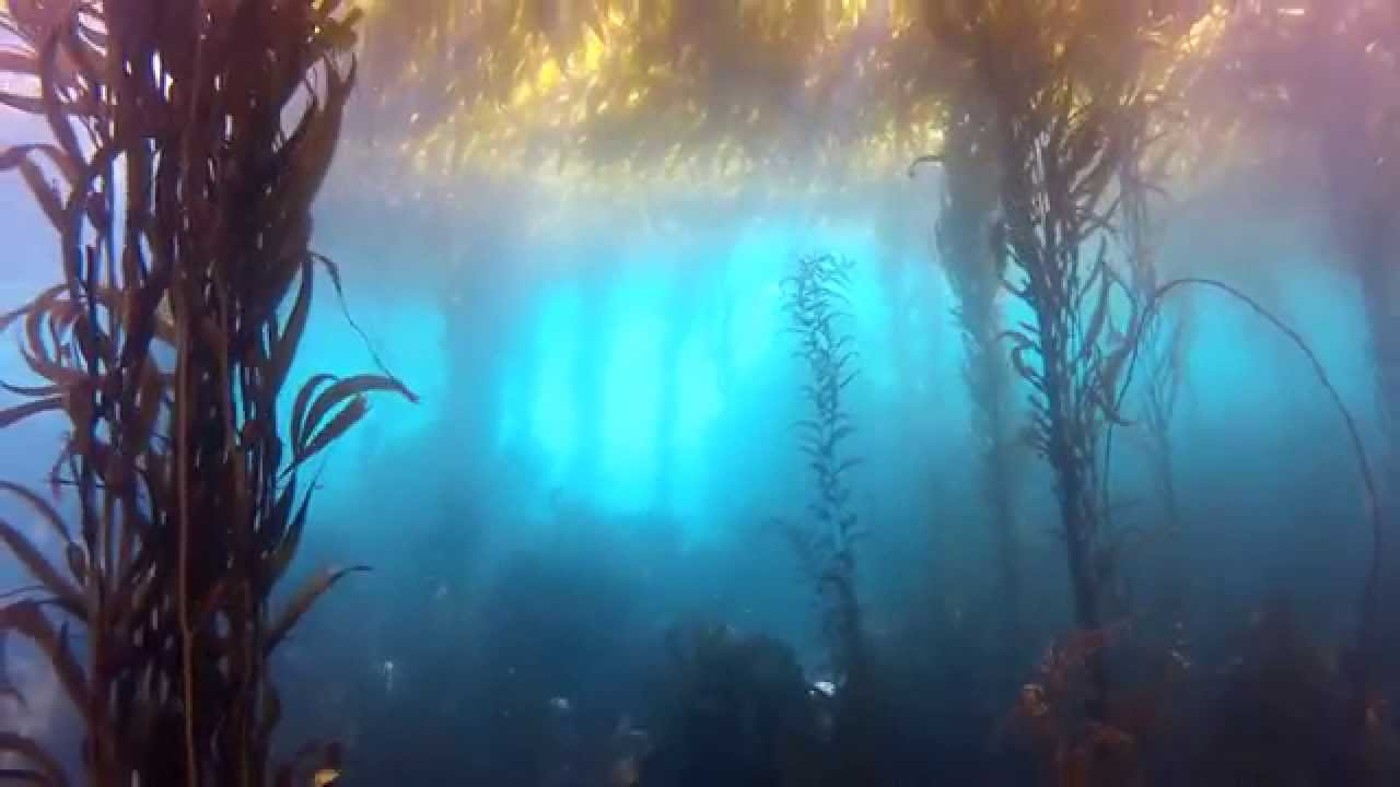 MontereyUnderwater.jpg