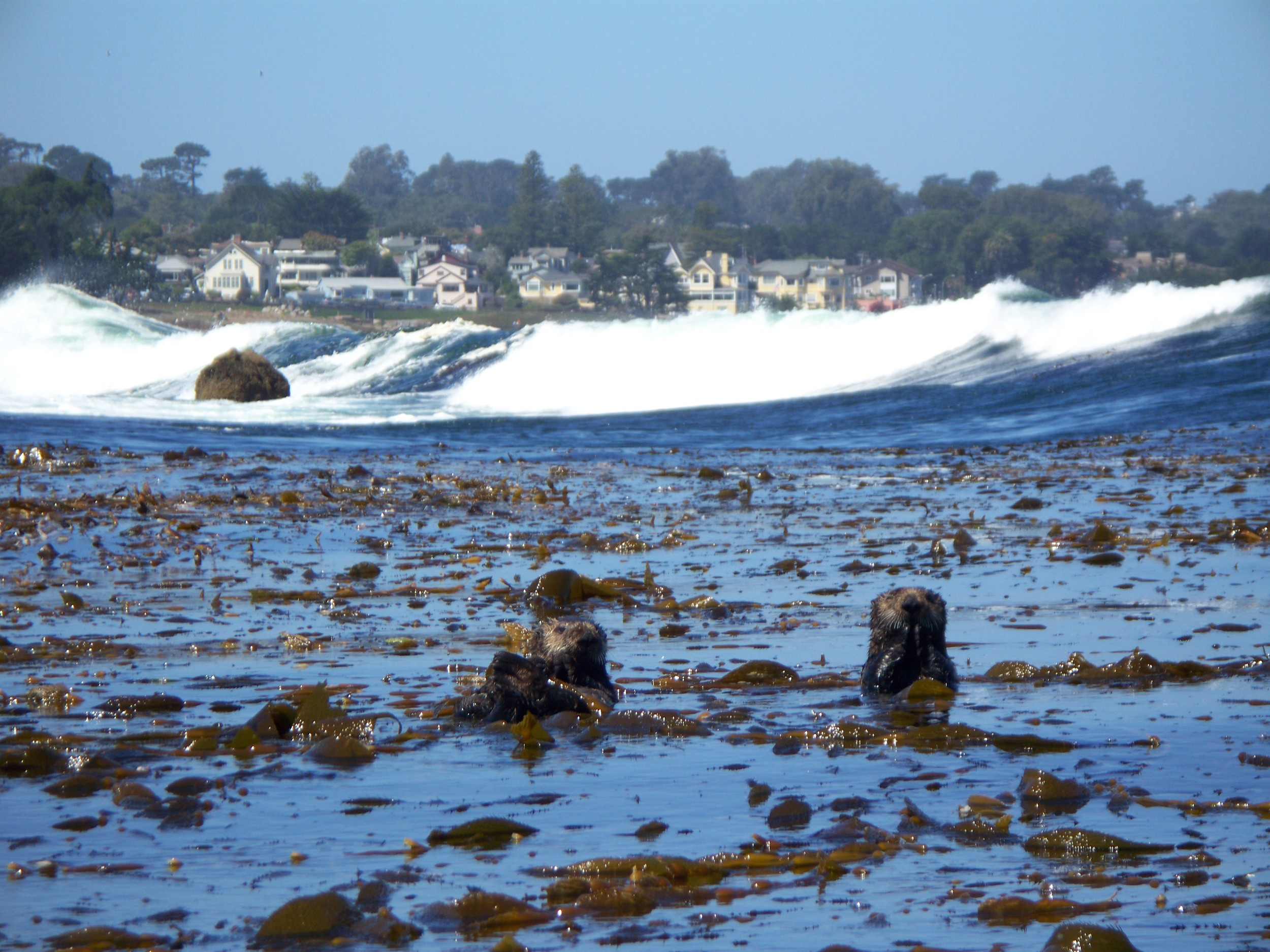 PG-Otters.jpg