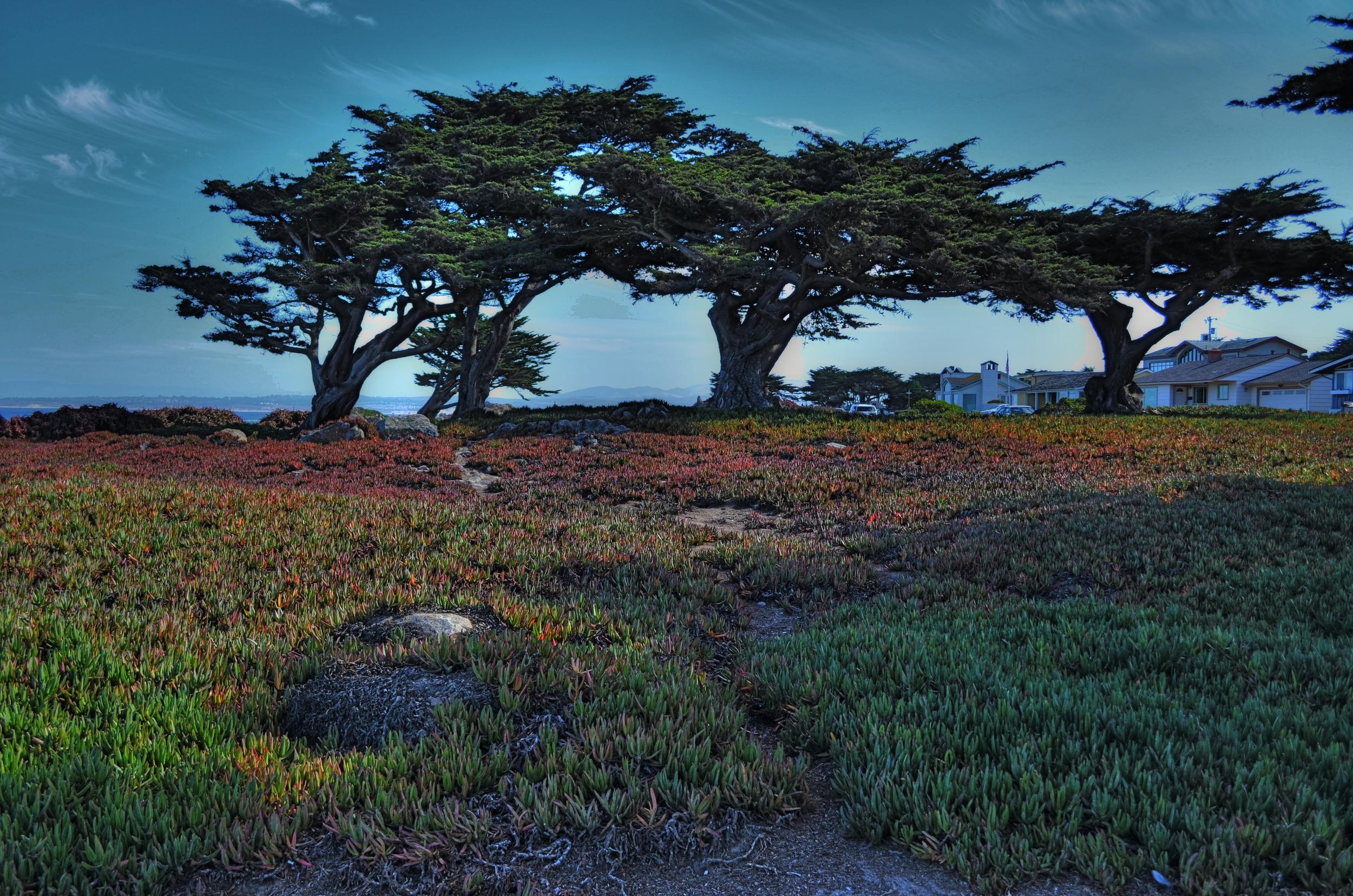 PG-Trees.jpg