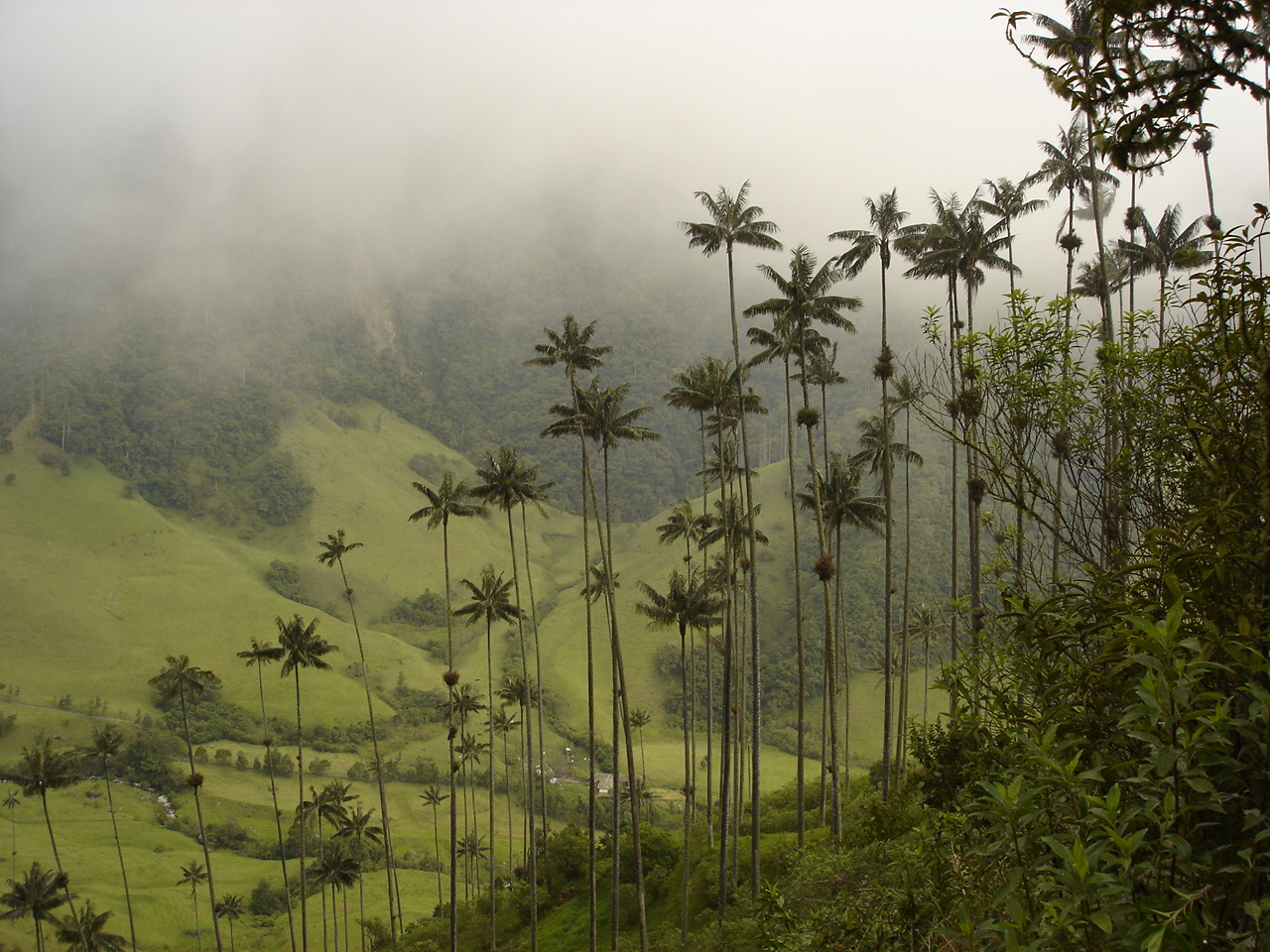 The Valley of Cocora, how gorgeous is this view? Image Source: Wikipedia
