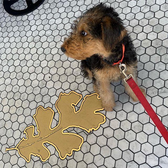 Puppy brunch at #fortoak @fortoaksd