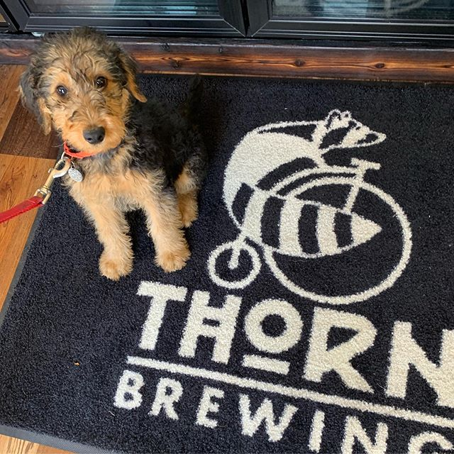 @thornbeer puppy pub crawl @joriekopy