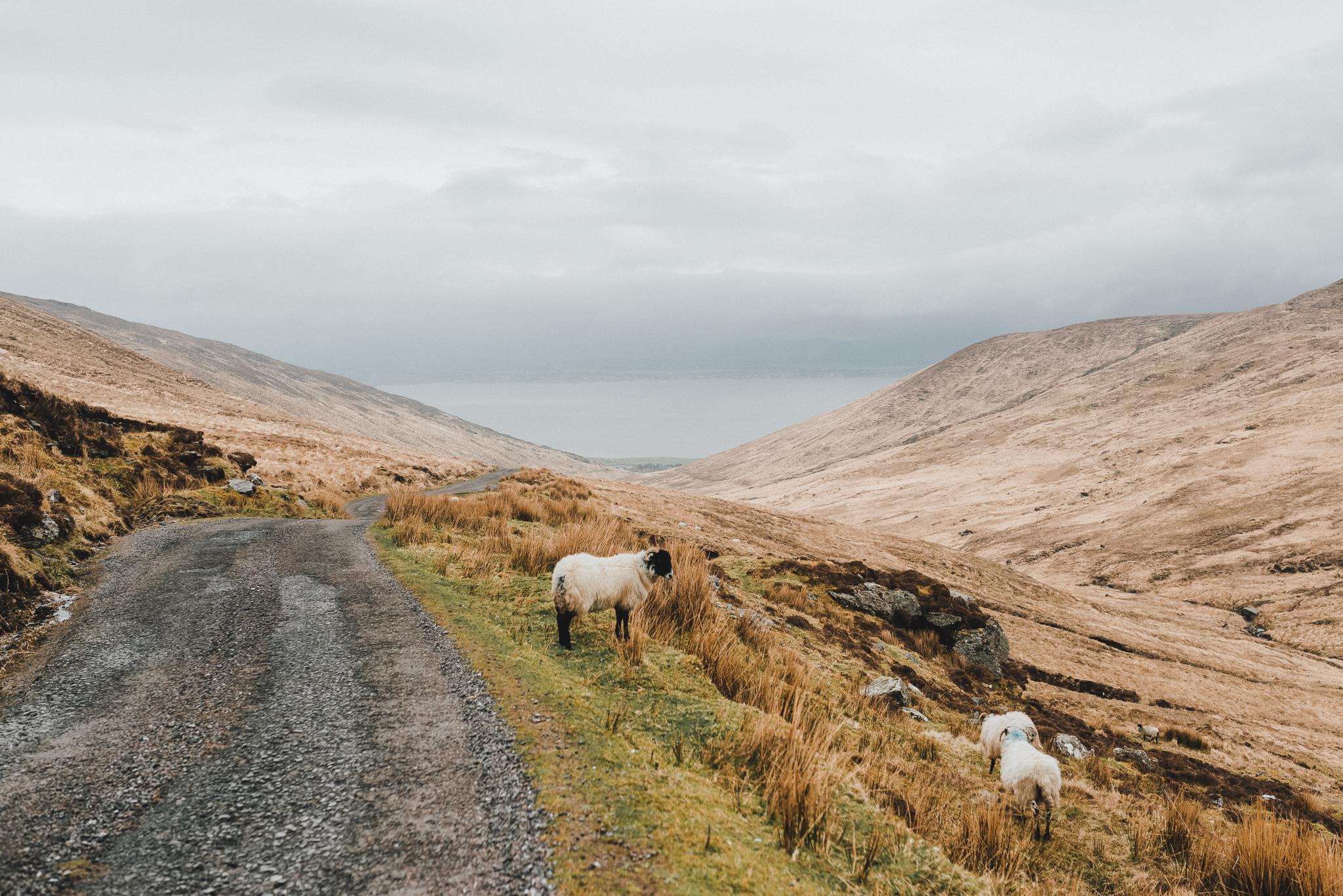 thekoebels-ireland-25.jpg