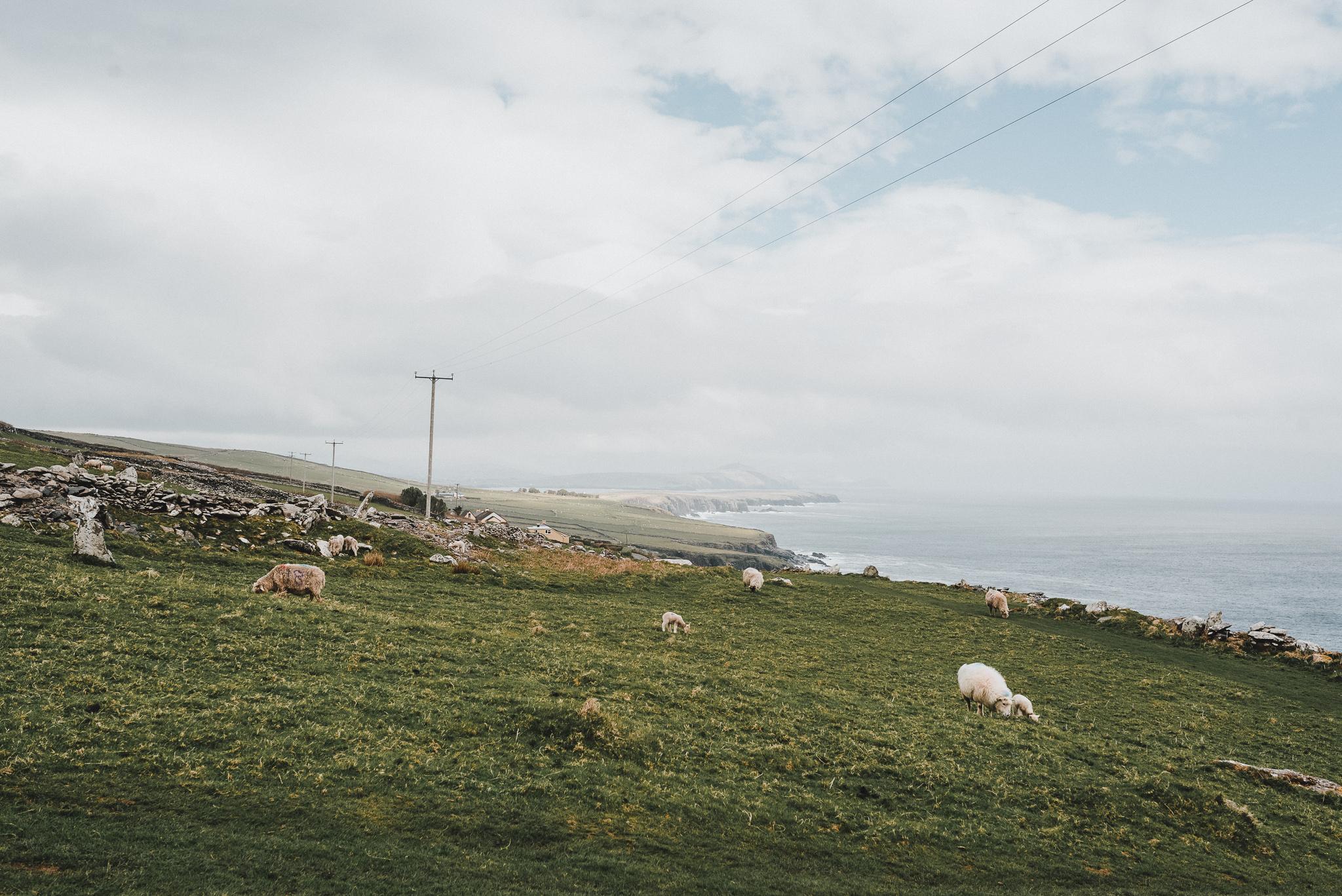 thekoebels-ireland-39.jpg