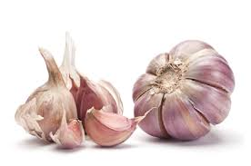 garlic image.jpeg