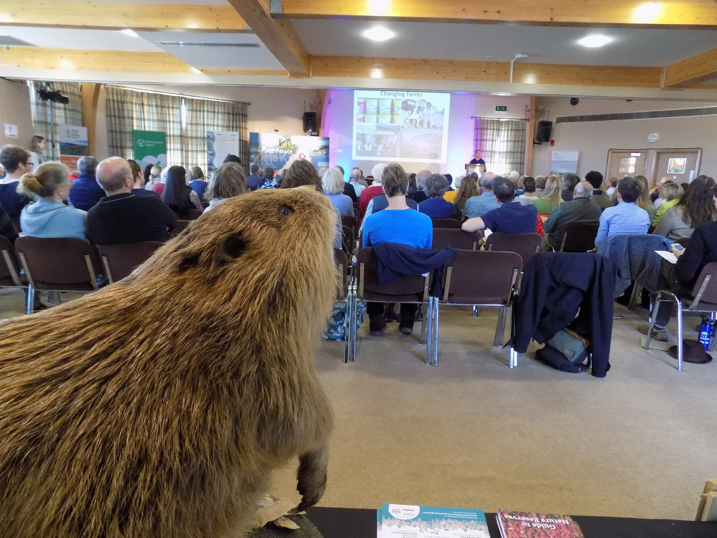 The Beaver watching the conference proceedings