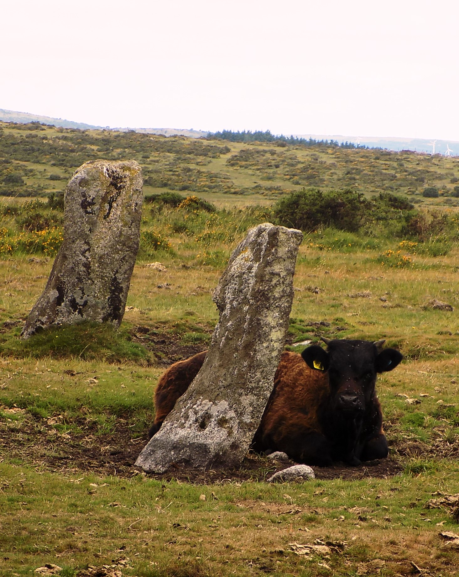 Nine Stones Circle on Bodmin Moor