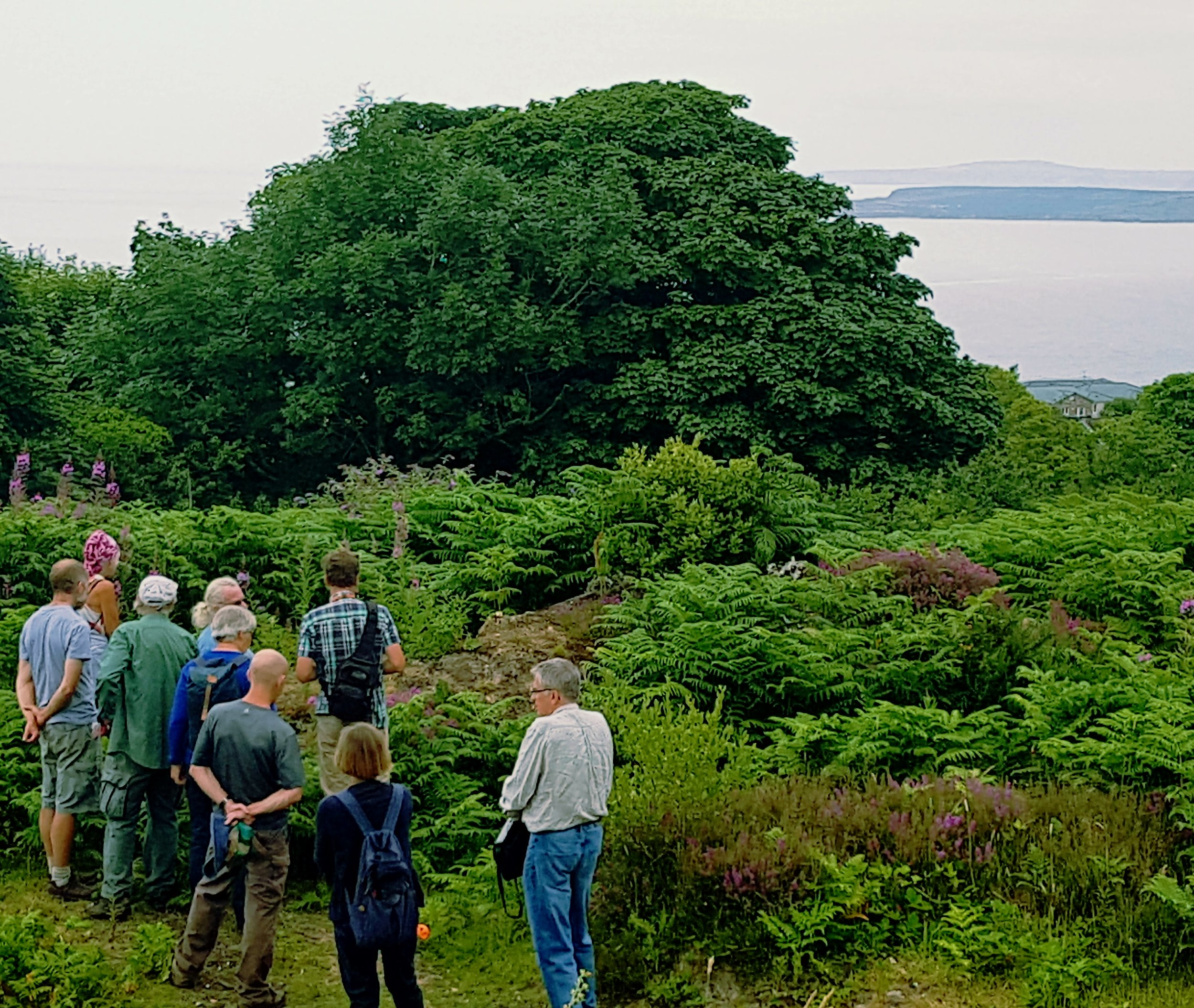 Our Project Ecologist showing Steeple Woodland volunteers how to benefit solitary bees at the Local Nature Reserve high above Carbis Bay