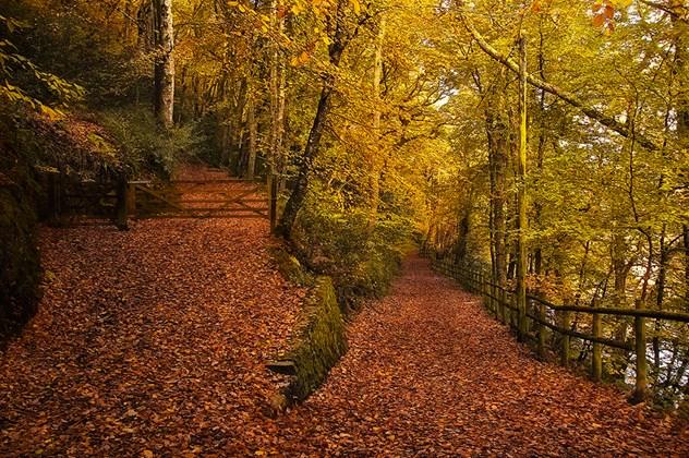 Woodland Trust Canopy.jpg