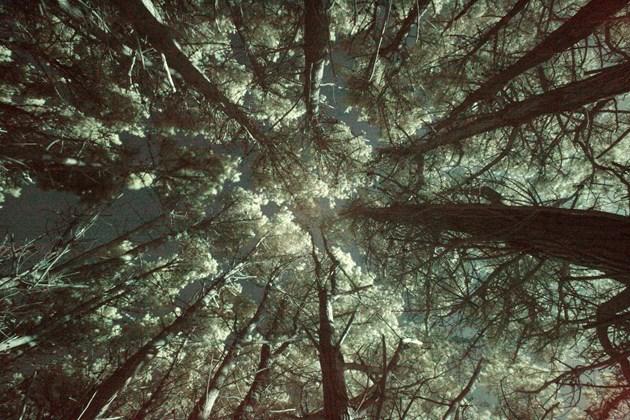 tree canopy image.jpg