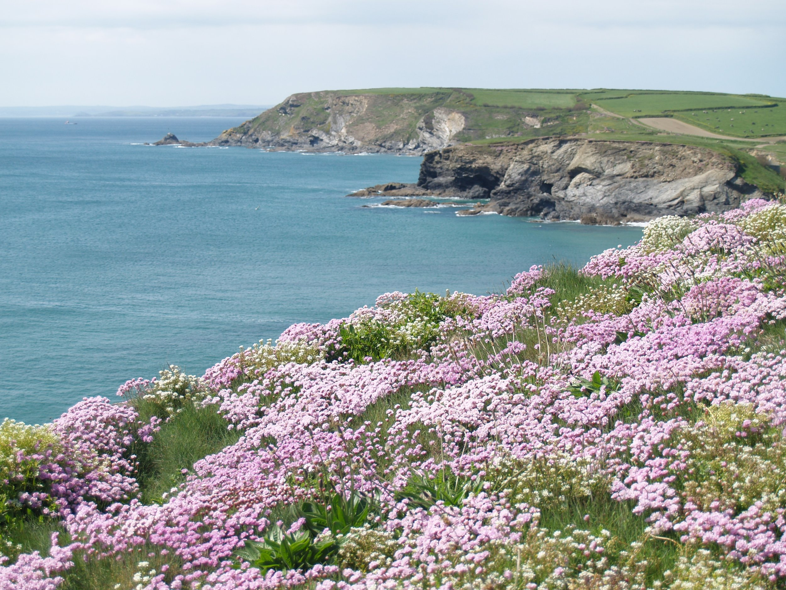 Coastal habitats could play a vital role in a Nature Recovery network. Photo: John Borlase
