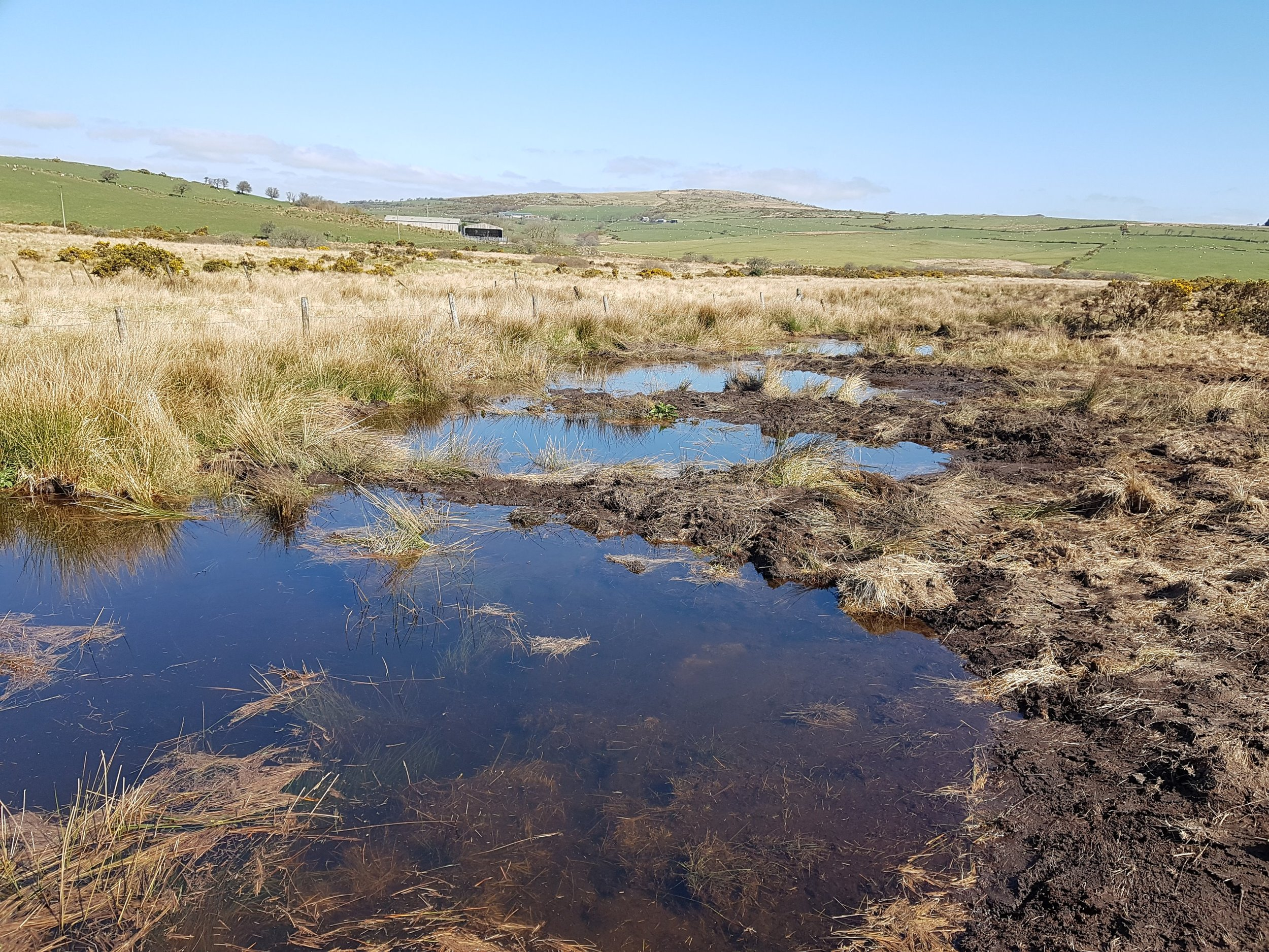 One of the first re-wetting projects on the moor providing important habitats for waders and dragonflies