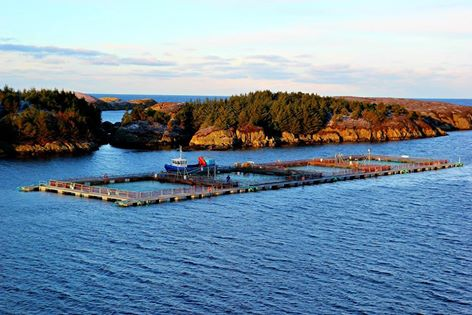 Landøy Fiskeoppdrett AS