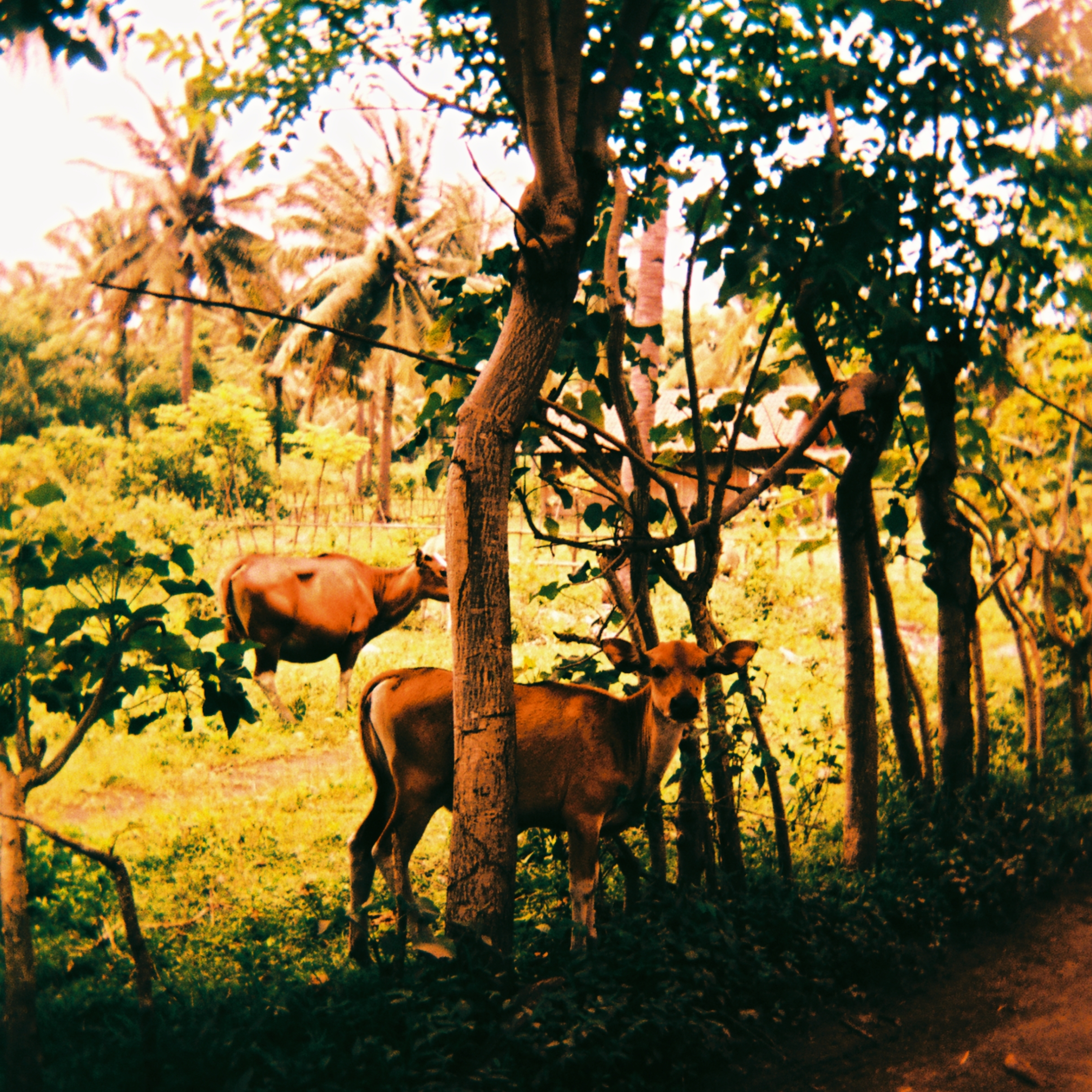 Travel_Diary_Bali_15