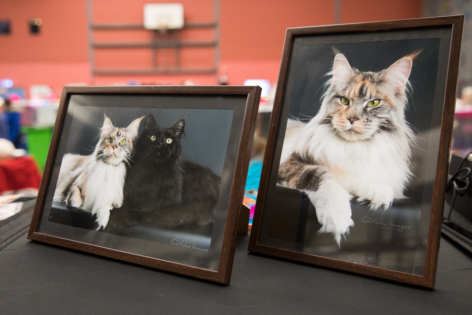 07-Kattenshow hilversum-7893.jpg