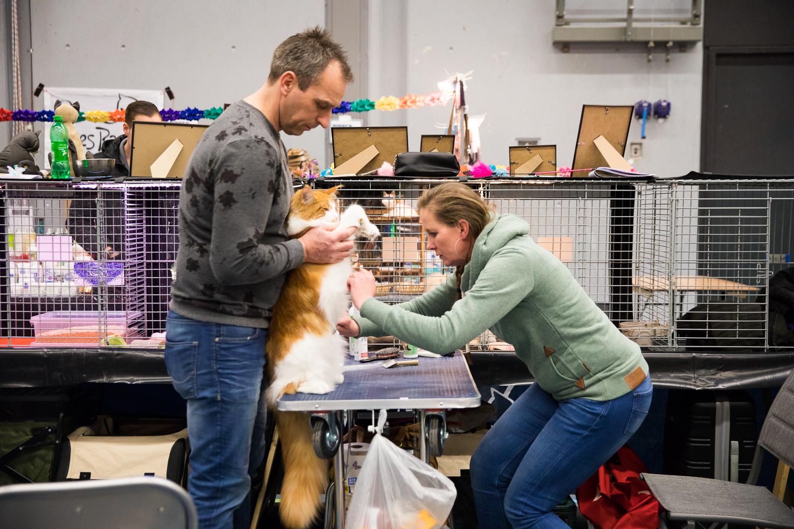 12-Kattenshow hilversum-7951.jpg