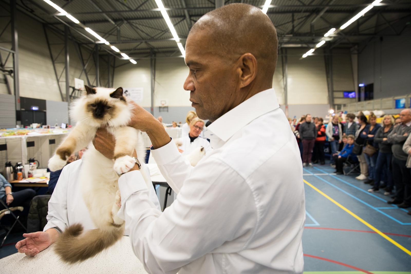 18-Kattenshow hilversum-8171.jpg
