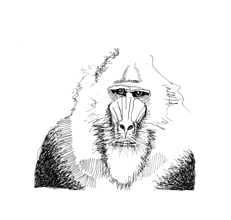 baboon-correct.jpg