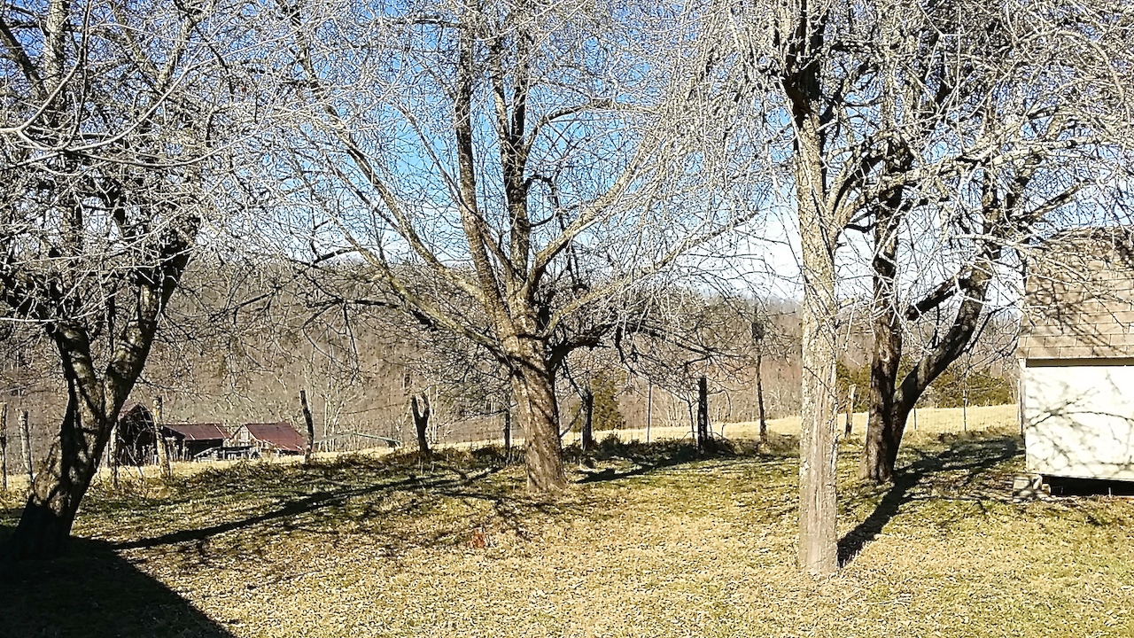 3 Apple Trees and 1 Pear Tree.jpg
